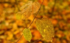 foto-autumn11