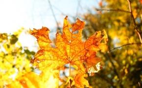 foto-autumn13