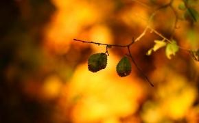 foto-autumn15