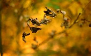 foto-autumn19