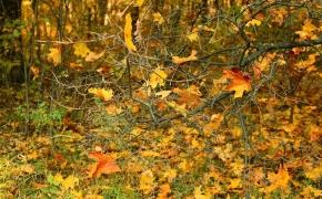 foto-autumn2