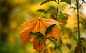 foto-autumn21