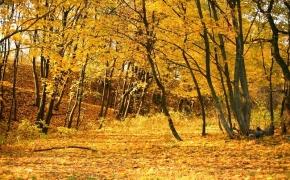 foto-autumn28