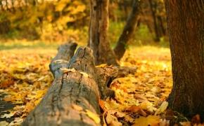 foto-autumn33
