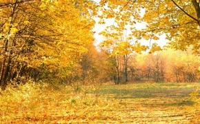 foto-autumn35