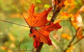 foto-autumn4