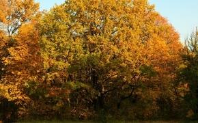 foto-autumn49