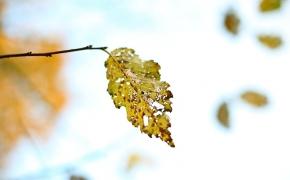 foto-autumn59