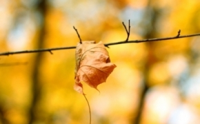 foto-autumn6