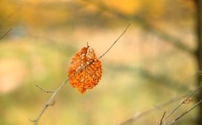 foto-autumn61