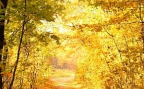 foto-autumn9