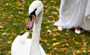 foto-svadba (9)